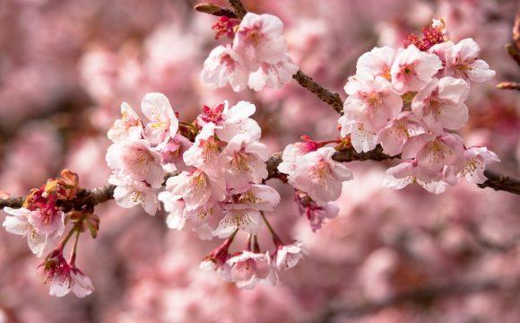 Με τα Λουλούδια της Άνοιξης